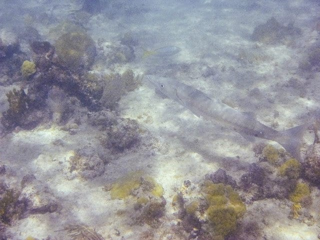Tamarindo Sea Creatures