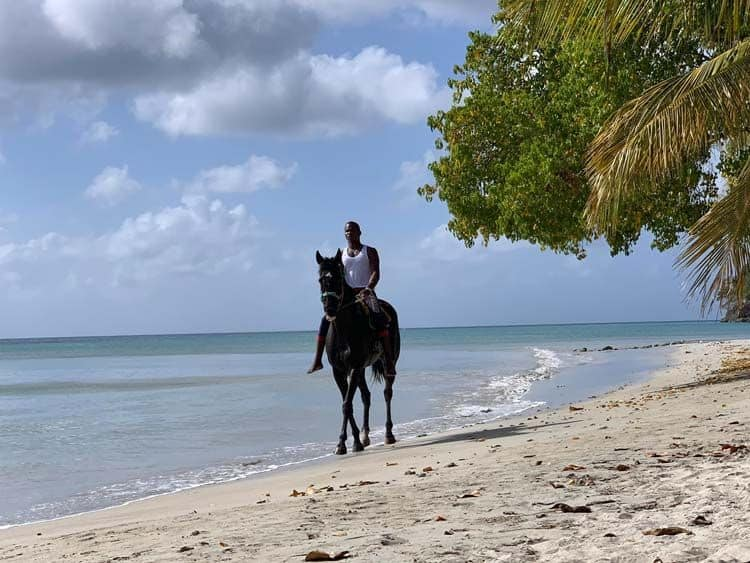 Local riding horse, South West Bay, Providencia