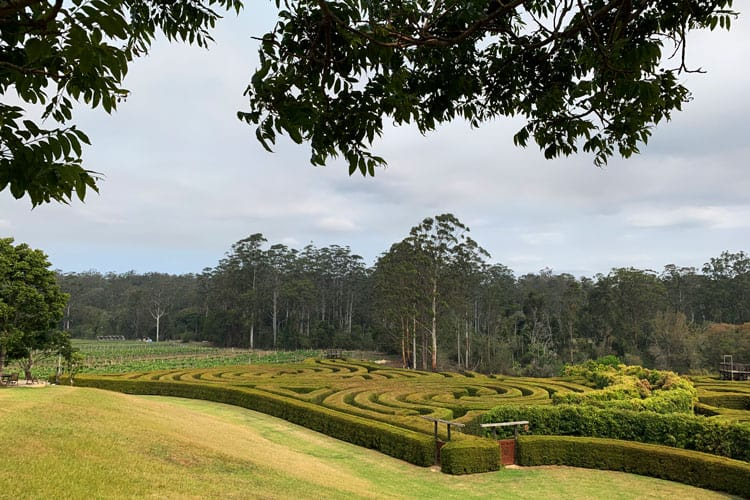 bago maze winery port macquarie