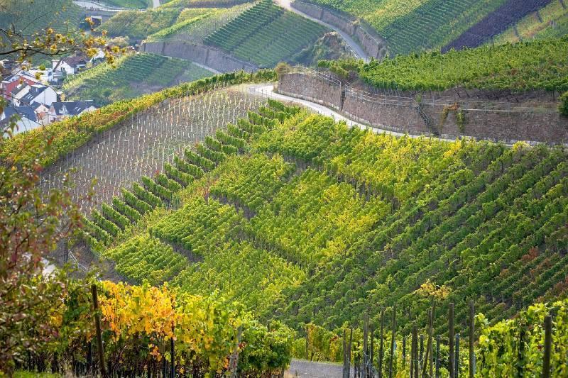 Red Wine Trail