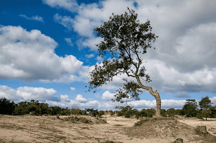National Parks Netherlands De Loonse en Drunense Duinen National Park