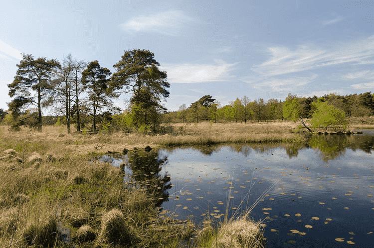 National Parks Netherlands De Meinweg National Park