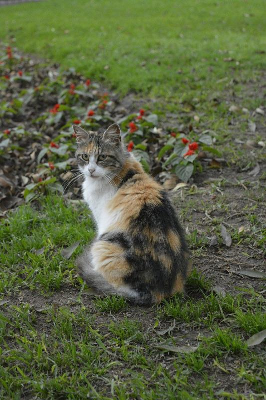 Kennedy Park Cat