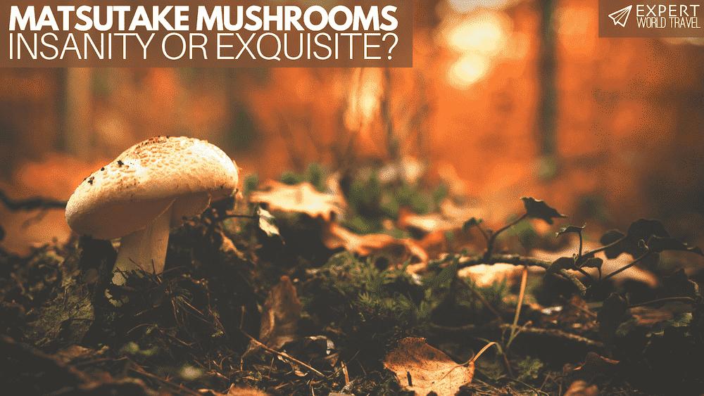 Japan's $200 Matsutake Mushrooms