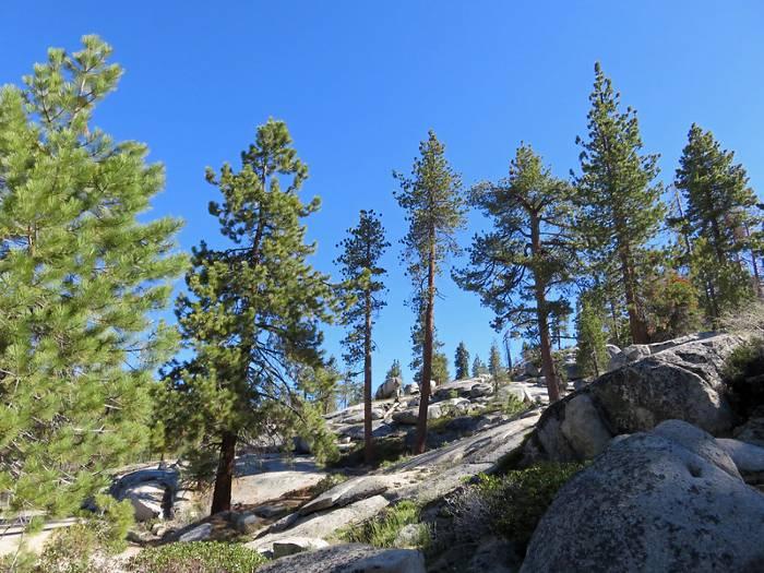 Sequoia NP Rocks