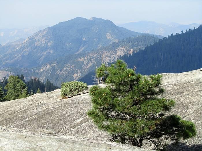 Sequoia NP Views